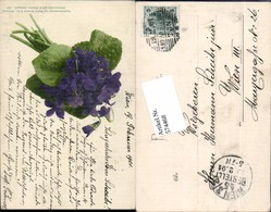 574468,Blumen Botanik Veilchen Pub Martin Rommel & Co. 521 - Botanik