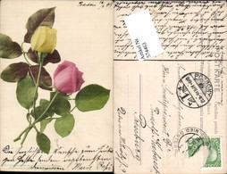 574463,Blumen Botanik Rosen Pub Martin Rommel & Co. 542 - Botanik