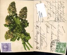 574460,Blumen Botanik Pub Martin Rommel & Co. 575 - Botanik