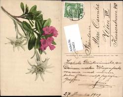 574453,Blumen Botanik Edelweiss Pub Martin Rommel & Co. 523 - Ohne Zuordnung