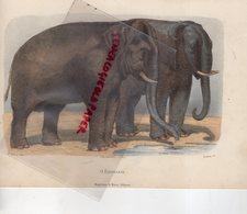 GRAVURE ANCIENNE COCLORISEE ELEPHANT - O ELEPHANTE-EDITEUR MAGALHAES & MONIZ- GOBIN - RAMUS-BUFFON - Estampes & Gravures