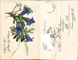 576035,Botanik Blumen Pub Martin Rommel Stuttgart 531 - Ohne Zuordnung