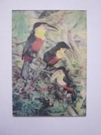 3d Lenticular Postcard Stereo Toucans - Stereoscopische Kaarten