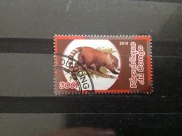 Congo-Brazzaville - Dieren (300) 2010 - Congo - Brazzaville