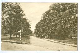 Vintage, UK, Malvern, The Avenue At Newland. Printed Pc, Unused. - Worcestershire