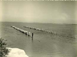 040918B - PHOTO 1959 - 13 SAINTES MARIES DE LA MER étang De Vaccares En Camargue - Saintes Maries De La Mer
