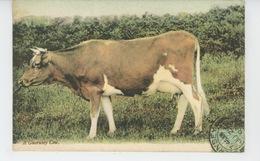 ROYAUME UNI - GUERNSEY - A Guernsey Cow - Guernsey