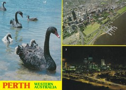Postcard Perth Western Australia Multiview Black Swan Aerial View Of City & Night View From Kings Park My Ref  B22920 - Perth