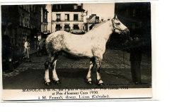 AL 642 -CARTE PHOTO   -   LISIEUX-   M. FOUCAULT ELEVEUR  - MANOLA  1° PRIX LISIEUX 1930 ET PRIX D'HONNEUR CAEN 1930 - Lisieux