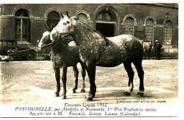 AL 643 -CARTE PHOTO   -   LISIEUX-   M. FOUCAULT ELEVEUR  -  PASTORELLE  CONCOURS LISIEUX 1932  1° PRIX POULINIERES - Lisieux