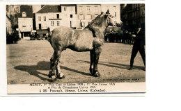 AL 644 -CARTE PHOTO   -   LISIEUX-   M. FOUCAULT ELEVEUR  - MERCY  1 PRIX  CAEN ET LISIEUX  1928  1929 - Lisieux