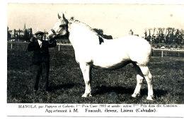 AL 645 -CARTE PHOTO   -   LISIEUX-   M. FOUCAULT ELEVEUR  - MANOLA 1 PRIX  CAEN  1933 ET NOMBRE  AUTRE 1° PRIX DANS DIVE - Lisieux