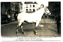 AL 646 -CARTE PHOTO   -   LISIEUX-   M. FOUCAULT ELEVEUR  -  PASTOURELLE 2 ° PRIX CONCOURS LISIEUX 1930 - Lisieux