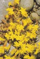 Postcard Irish Flora Wall Pepper Flower My Ref  B22928 - Other