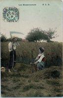 Agriculture - Les Moissonneurs - Cultures