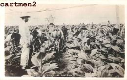 PHOTO CARD HABANA TOBACCO PLANTATION TABACO AGRICULTURE TABAC LA HAVANE CUBA - Cuba