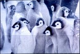 BIRDS- PENGUINS #13 - ARCTIC LIFE - PICTURE POST CARD - CHINA- MNH-MC73 - Vögel
