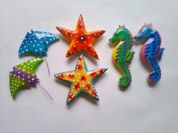 Starfish, Sea Horse And Stingray - Tourism
