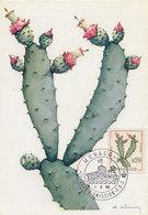 D34937 CARTE MAXIMUM CARD 1960 MONACO - CACTUS NOPELEA-DEJECTA CP ORIGINAL - Cactusses