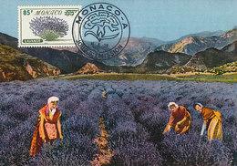 D34939 CARTE MAXIMUM CARD FD 1959 MONACO - LAVENDER CP ORIGINAL - Plants