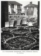 1952 - Héliogravure - Epernay (Marne) - Un Vendangeoir Aux Environs - FRANCO DE PORT - Unclassified