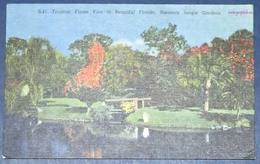 Etat-Unis USA, Carte Postale (United States Of America Post Card, Spojené štáty Americké Pohladnice)  Neuve - Sarasota