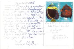 Grenada 1999 George Ringed Emperor Scribbled Angle Fish Viewcard - Grenada (1974-...)