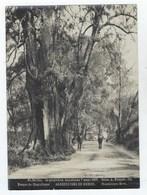 Alrededores De MEXICO - Bosque De Chapultepec - Foto A. Briquet 1907 - N° 34 Bis - Fotos