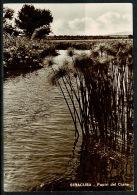 RB 1224 - Unusual View Postcard - Papiri Del Ciane - Siracusa Sicily Italy - Siracusa