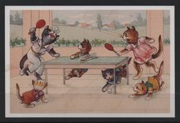 Photo Repro  Tennis De Table Humour Cat Chat Ping - Tennis De Table