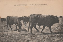 CPA 13 EN PROVENCO  TAUREAUX  UNO MANADO DE BIOU EN CAMARGO - Non Classés