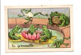 CHROMOS BON POINT - ANIMAUX - LA GRENOUILLE - Chèques & Chèques De Voyage