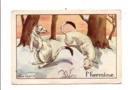 CHROMOS BON POINT - ANIMAUX - L'HERMINE - Chèques & Chèques De Voyage