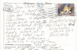Bahamas 1998 Shell Lace Short-frond Murex Viewcard - Bahama's (1973-...)