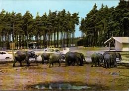 ! Moderne Ansichtskarte  Stukenbrock, Senne, Elefanten, Elephants - Elefanten