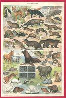 Fourrures, Fourrure,colobe, Loup, Renard, Isatis, Taupe, Civette, Loutre... Illustration Adolphe Millot, Larousse 1908 - Autres