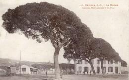 06 - Cannes - La Bocca - Gare Des Marchandises Et Les Pins - Cannes