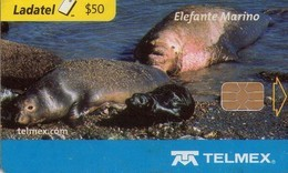 TARJETA TELEFONICA DE MEXICO (FAUNA). ELEFANTE MARINO (008) - Mexico