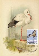 D34994 CARTE MAXIMUM CARD 2017 NETHERLANDS - CICONIA STORK ORIGINAL - Storks & Long-legged Wading Birds