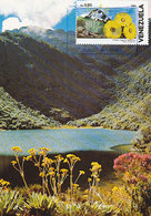 D34995 CARTE MAXIMUM CARD 1987 VENEZUELA - ESPELETIA FLOWERS CP ORIGINAL - Plants