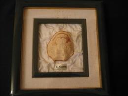 Große Geschnittene Muschelcamee - Gerahmt - Sign. C.Piscopo (604) - Art