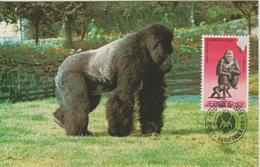 Jersey Carte Maximum 1979 Animaux Gorille 204 - Jersey