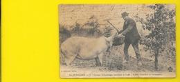 Périgord Récolte De La Truffe Cochon (Guiraud) Dordogne (24) - Frankreich