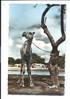 PAYS SOMAL - DROMADAIRE - J Et W. SIAD éditeur - Vente Directe - Somalia