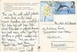 Mauritius 1972 Plaine Flower Tree Polyochnella Mauritiana Blue Marlin Fish Cinnamon Cannelle Viewcard - Mauritius (1968-...)