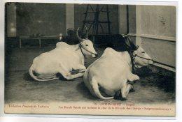 VIETNAM TONKIN COCHINCHINE SAIGON Les Boeufs Sacrés Num 70 Collection Poujade De Ladeveze  - écrite 1910    /D16-2016 - Vietnam