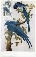 37740 U.s.a. Maximum 1965 The Birds Of America, By John James Audubon, - Maximumkarten (MC)