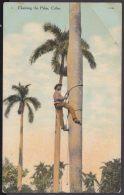 POS-1015 CUBA POSTCARD. CIRCA 1910. DESMOCHADOR DE PALMAS. CLIMBING THE PALM. - Cuba
