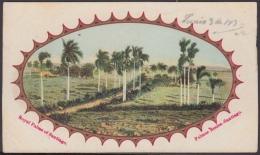 POS-1020 CUBA POSTCARD. 1903. SANTIAGO DE CUBA, CAMINO DE PALMAS REALES. - Cuba