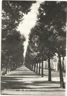 X4049 Grottammare (Ascoli Piceno) - La Pineta / Viaggiata 1954 - Altre Città